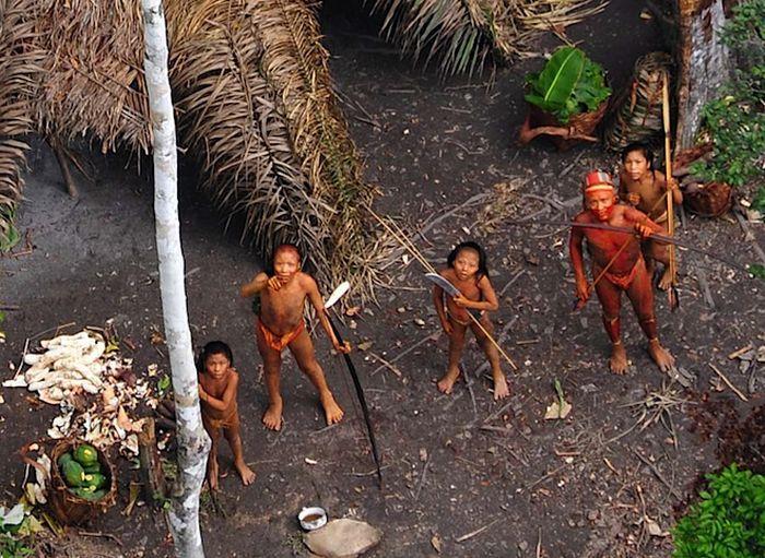 Тем не менее, большой опасности подвергается вероятность выживания племени из-за наплыва нелегальных лесорубов из Перу. <br> Бразильские власти уверенны, что наплыв лесорубов толкает изолированных Индейцев из Перу в Бразилию и, вполне возможно, может произойти конфликт двух групп аборигенов. <br/>    В 2008 году одно из племен, которое было якобы впервые обнаружено во время экспедиции в дельту Амазонки, <br>  стало причиной скандала. Ученые сообщили, что данное племя еще никогда не попадалось на глаза современному человеку, <br> а позже выяснилось, что эти индейцы были описаны еще в 1910-е годы. <br/>    Окрестности реки Амазонка – не единственное место, где сохранились первобытные племена.