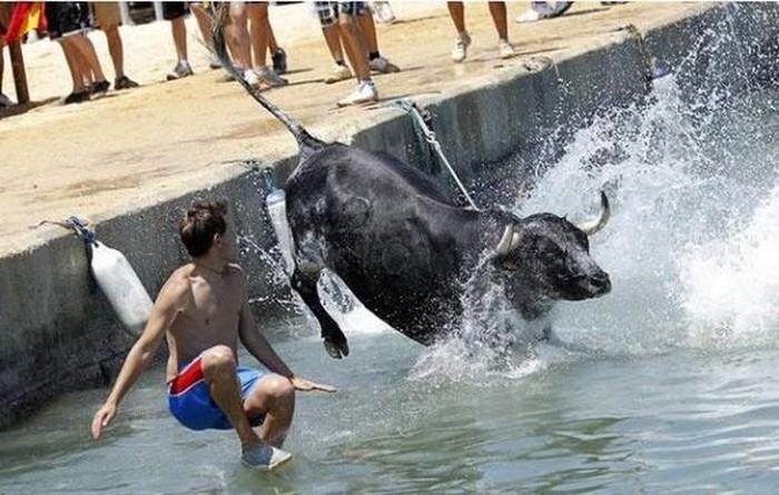 Забавы простых смертных и быков (25 фото)
