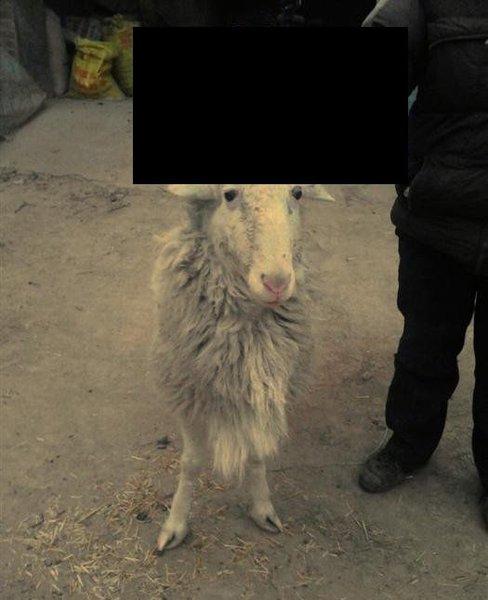 Странный козел (8 фото)