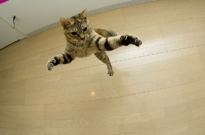 Летающие кошки (37 фото)