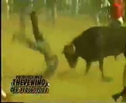 Разъяренные быки