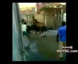 Собака напала на лошадь