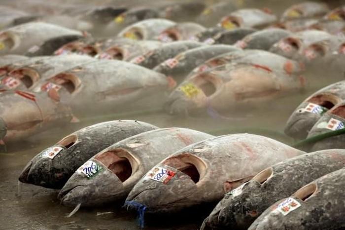 Самый знаменитый рыбный рынок в Японии (18 фото)