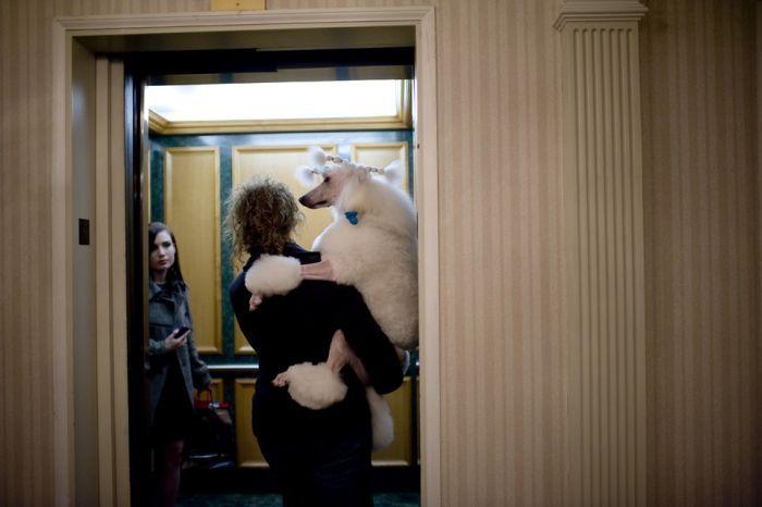 Собака Инге и ее будни (12 фото)