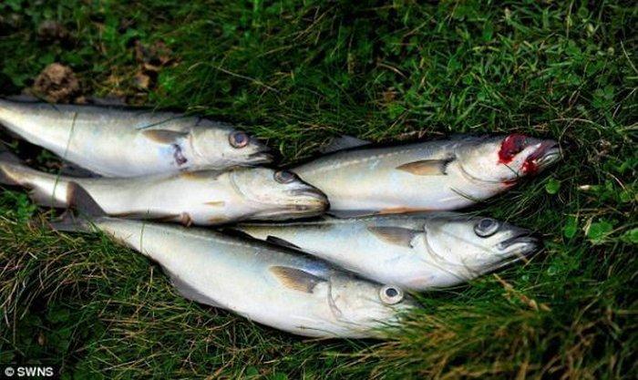 Очумевший рыбак (3 фото)