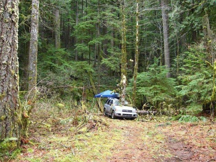 Травмоопасный отдых на автомобиле в лесу (5 фото)