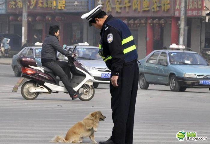Знакомство полицейского с собакой (6 фото)