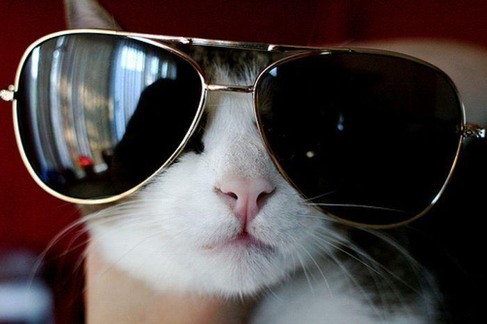 Приколы, картинки прикольные про котов в очках