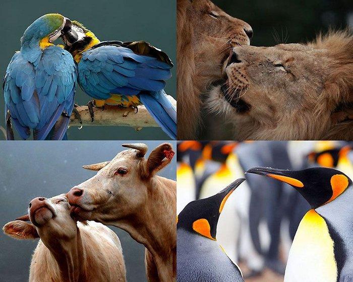Мир животных: Вдвоем (24 фото)