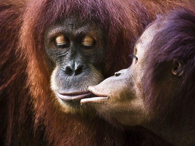 смешные картинки целующихся животных родители влади