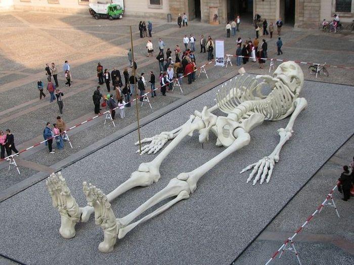 Гигантский путешествующий скелет (6 фото)