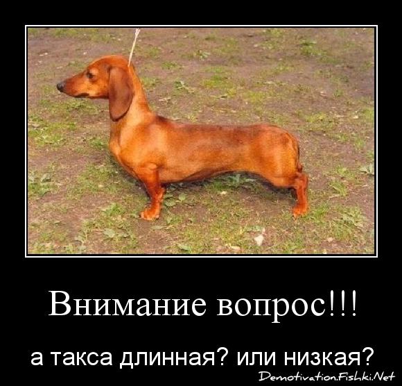 Внимание вопрос!!!