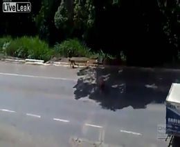 Столкновение пешехода и мотоциклиста