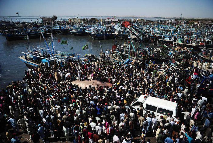Мертвую китовую акулу, найденную у побережья Пакистана, продали за $19 тыс. (8 фото)