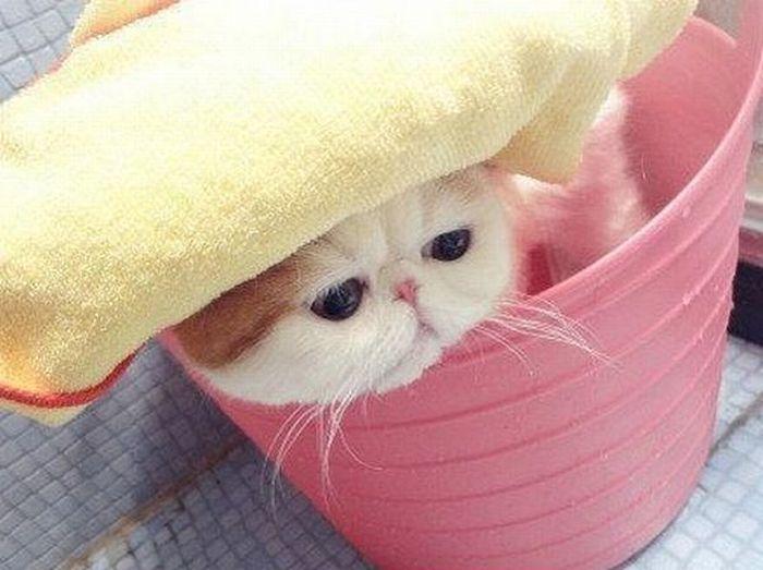 Милый котенок (7 фото)