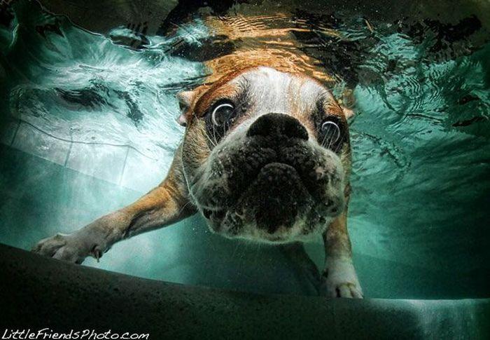 Подводные собаки Сета Кастила (82 фото)