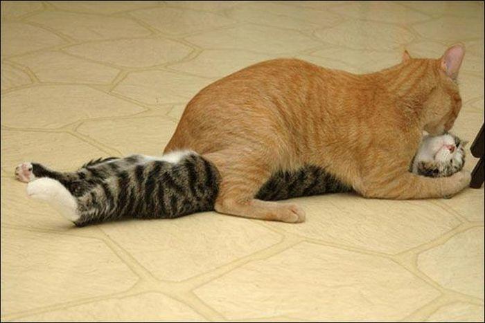 Коты спалились (14 фото)