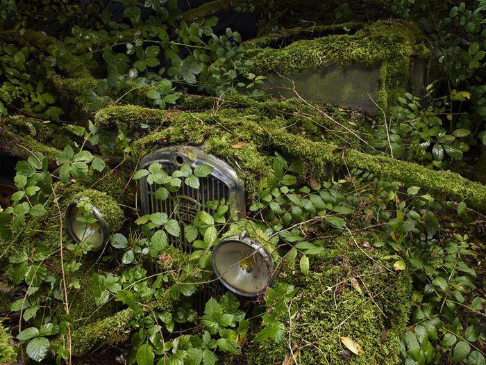 Старые автомобили наедине с природой (11 фото)