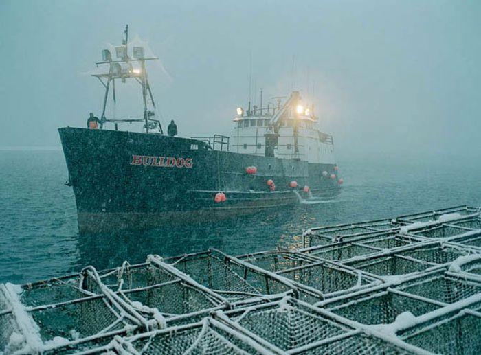 Добыча краба, трески и палтуса в Беринговом море (37 фото)