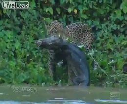 Жестокий животный мир