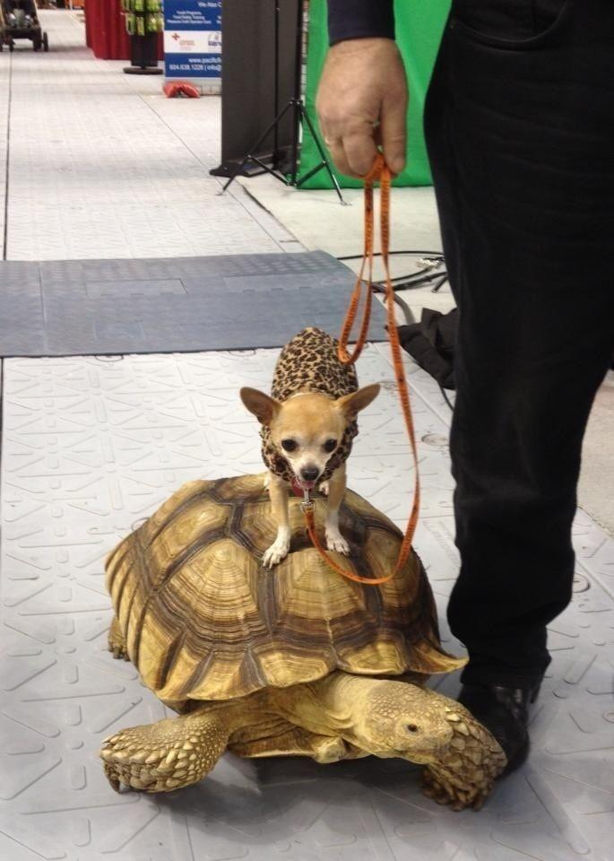 Зачетное фото нарядил пса, поводок, собачка, черепаха