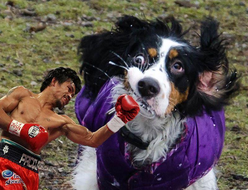 Смешные картинки боксер, выражение лица, прикол, собака, удар в голову