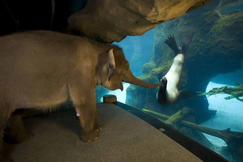 Фотоальбом выражение лица, за стеклом, зоопарк, океанариум, прикол, слон