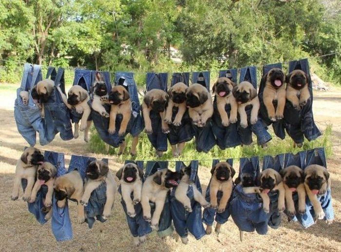 Красивые фото в одежде, висят, прикол, собаки, щенки
