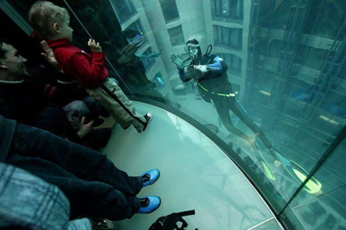 Яркие фото аквалангист, аквариум, дети, лифт