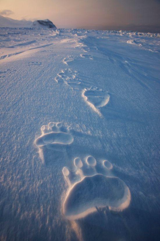 Бугагашеньки заснеженные просторы, медведь, отпечаток, следы