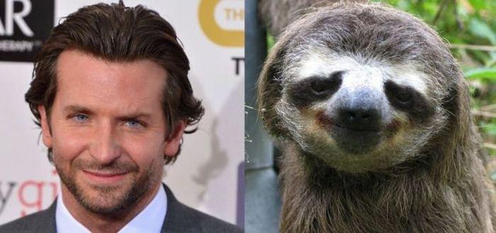 Бесплатно фото знаменитость, ленивец, одно лицо, похожие лица