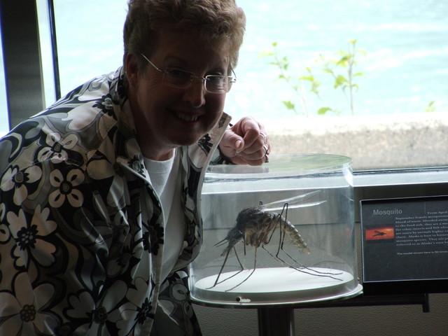 Фотоприкол онлайн бесплатно комар, насекомое, огромное животное