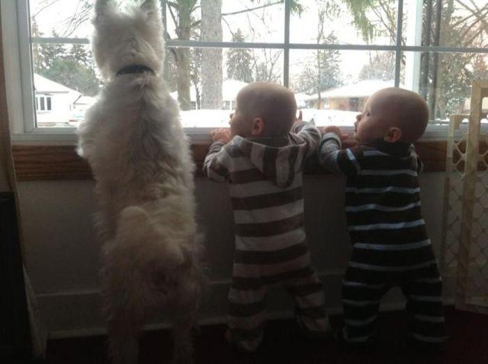 Фотоприкол онлайн бесплатно дети, прикольная фотка, собака