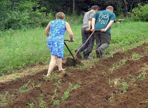 Юмор жена и муж, огород, поле, пропалывают