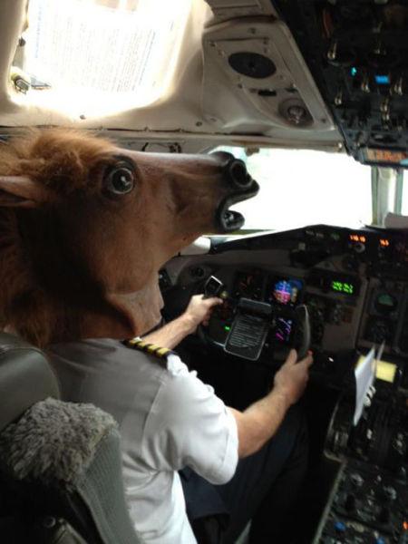 Фотоподборка голова лошади, маска коня, пилот, самолет