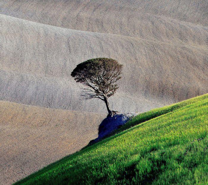 Смешные картинки горы, дерево, красота природы, поле