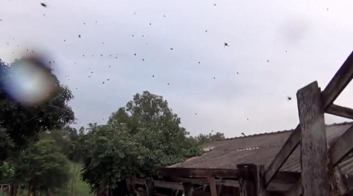 паук, бразилия