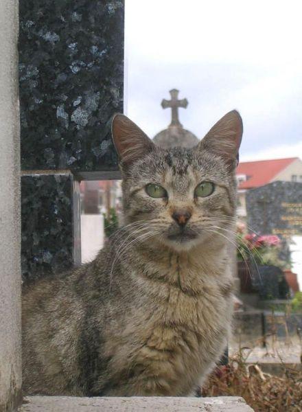 Новые фото задний план, котейка, кошка, питомец
