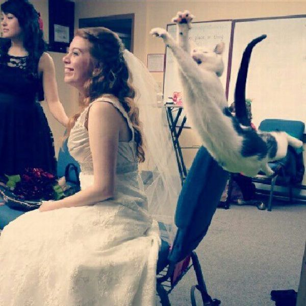 Фотоприкол дня девушка, кошка, питомец, прыжок, свадебное платье