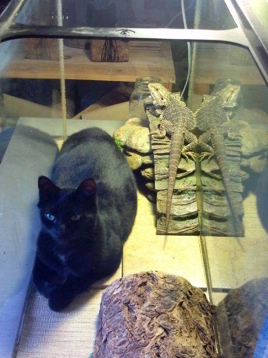 Смешная фотогалерея аквариум, кошка, питомцы, ящерица