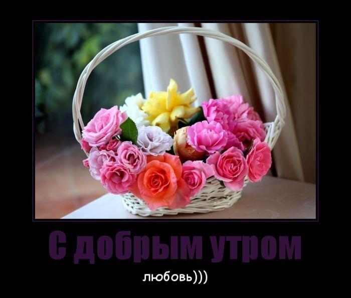 демотиваторы, демотиватор, любовь, день любви