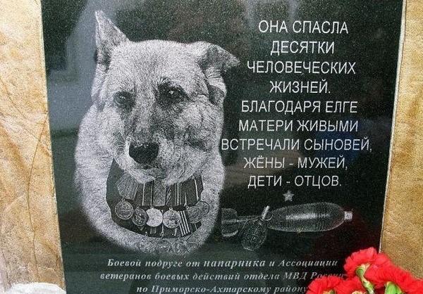 Фотоприкол онлайн бесплатно верный друг, памятник, собака, товарищ