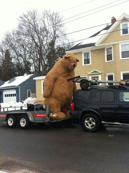 Новый фотоприкол авто, медведь, прикол, прицеп