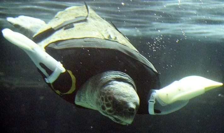 черепаха, протезы, ласты
