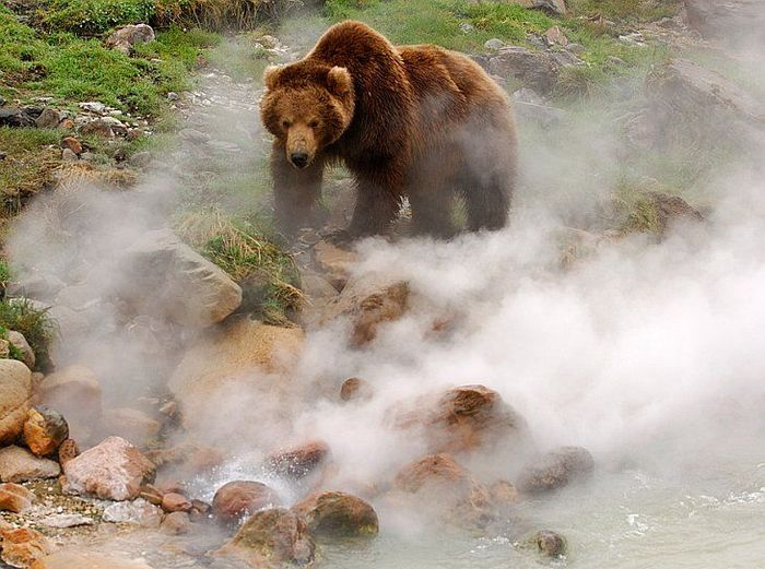 гейзер, вулкан, медведи