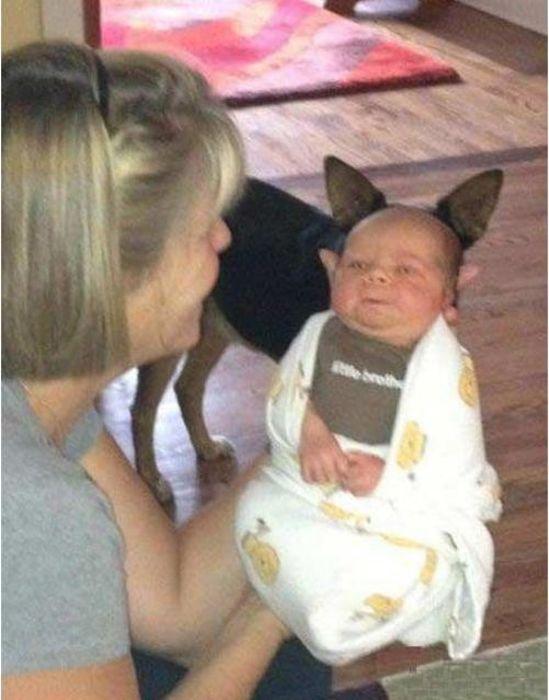 Фото мама и сын, младенец, показалось, собака