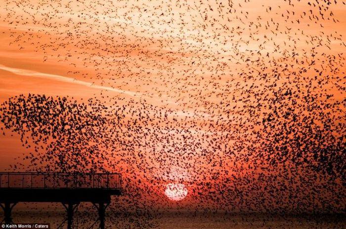 скворцы, птицы, небо, стая