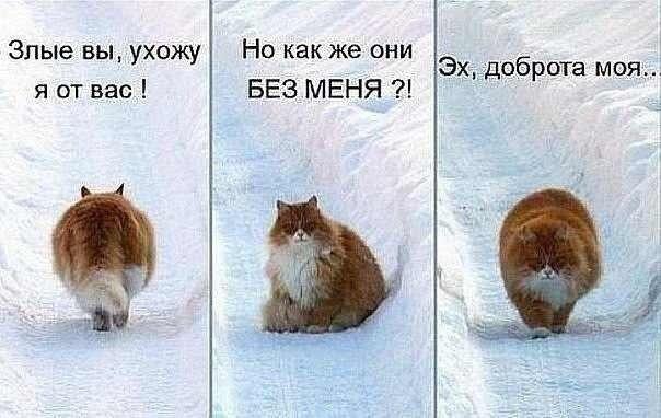 Отпадные фотки картинка с надписью, кот, прикол, рыжий
