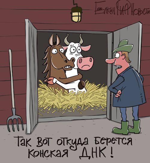 Свежий фотоприкол картинка, корова, лошадь, ферма