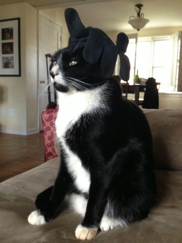 Фотоприкол онлайн бесплатно важный кот, выражение лица, головной убор, перчатка